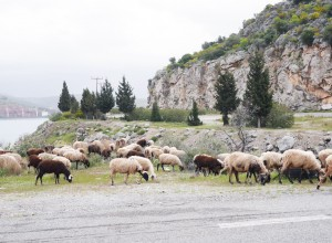 grece59